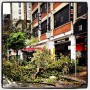 Trees down in manhattan.