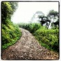 "Thanksgiving Day rain walk in the ""jungle"" of Costa Rica.  The ""music"" of howler monkeys was good motivation to keep moving."