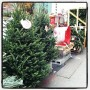 Christmas trees for sale Two Days BEFORE Thanksgiving!! When will the madness end ?