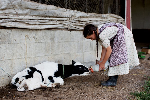 On the Road…Rural Farm, Pennsylvania