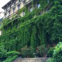 This is one of my favorite  buildings in Milan. Actually I don't really know what the building looks like but I love the ivy that overtakes almost the entire facade every Summer.