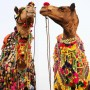 If You're Thinking About….Camels & Camel Accessories, Pushkar, India