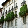Ok ok! Another beautiful, green choked balcony in Milan. This one is in the historic, old section of Milan. If you think they are just trying to hide ugly iron work just look above those greens and see the beauty ( but even grander) that is beneath. #TheSartorialistItaly